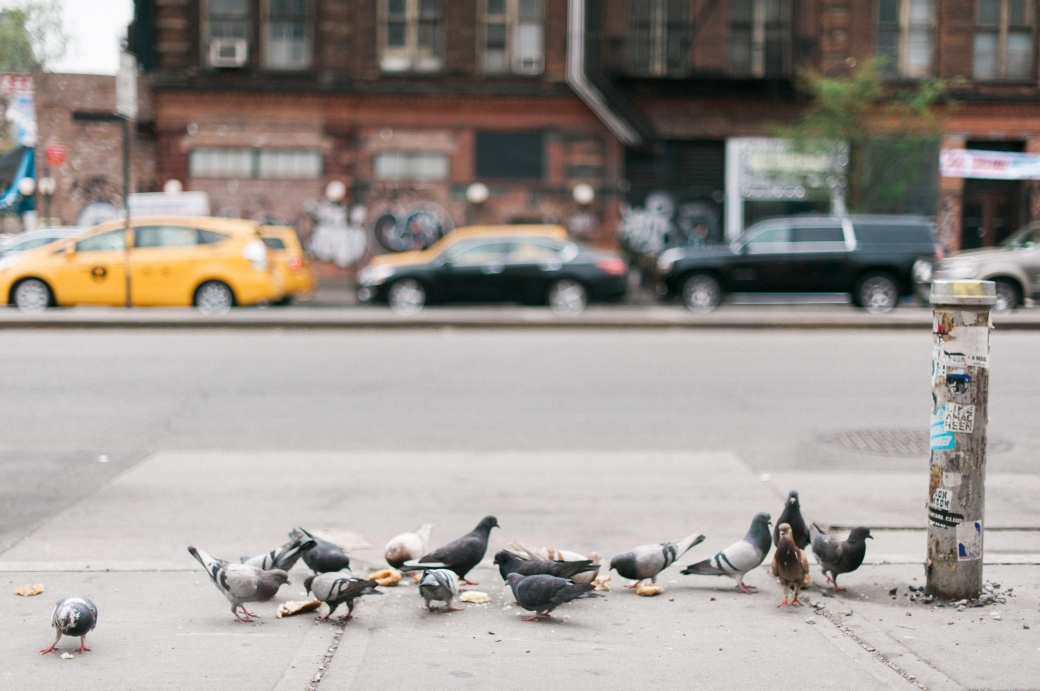 Pigeons and Yellow Cabs, New York City Travel Photography by Briana Morrison