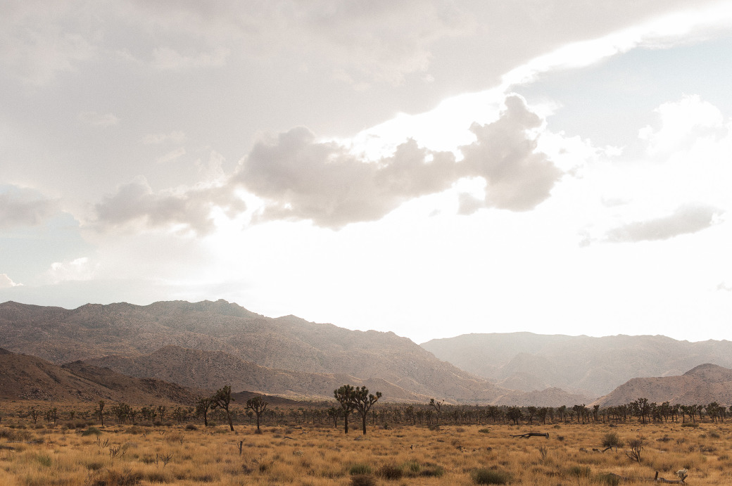 Joshua Tree National Park in the fall. Photographed by Joshua Tree wedding photographer, Briana Morrison