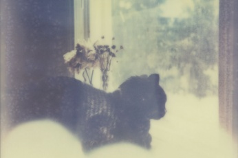 A black cat alone in the window - Impossible Project Polaroid by Briana Morrison