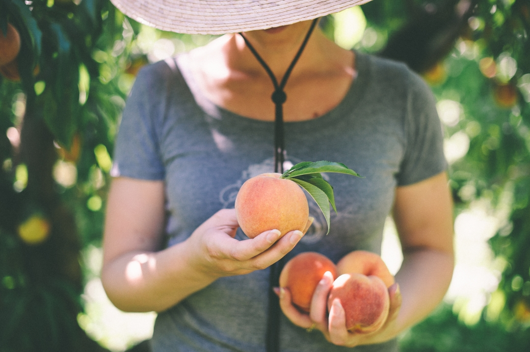 Peach Season in Hood River, Oregon